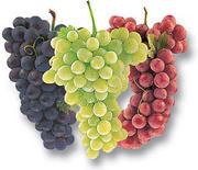 9 Fakta TentanG Kandungan Buah Anggur